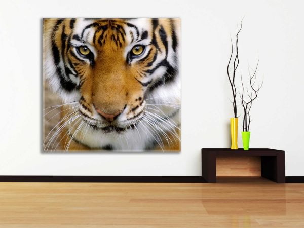 תמונות בעלי חיים להדפסה, הדפסת תמונות נוי - חיוכים