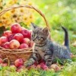 תמונת חתלתול להדפסה מס' 351466