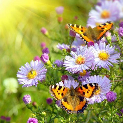 תמונות פרחים לסלון - תמונת פרחים צבעונית להדפסה - חיוכים
