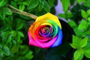 תמונות צילום מקורי   תמונות קיר לבית - פרח צבעוני   חיוכים - הדפסות קנבס ומגנטים לאירועים